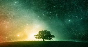 magical-night-with-stars-and-tree-wallpapers-t