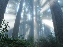 light_in_fog_small